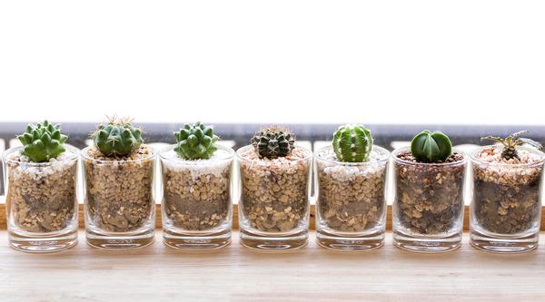 plantinhas em vaso- suculentas
