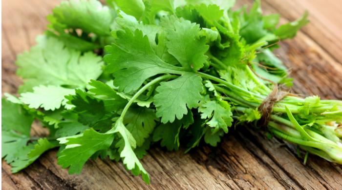 Ervas Aromáticas- salsinha cheiro verde descubra como utilizar em receitas